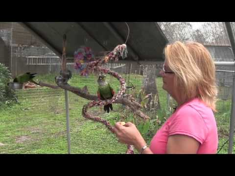 Florida Exotic Bird Sanctuary Infomercial