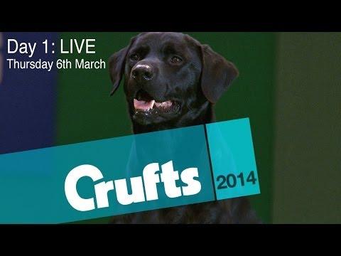 Crufts 2014 | Day 1 LIVE
