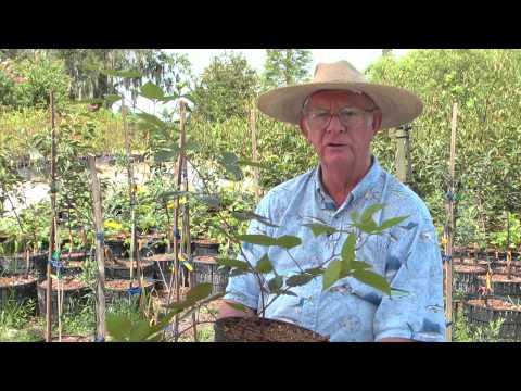 How To Grow Blackberries