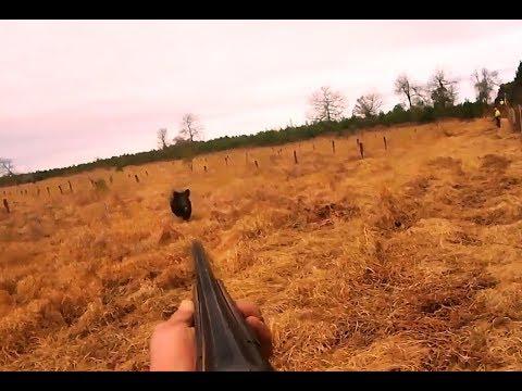 Chasse en battue | Tirs d'un gros sanglier , Hunting wild boar
