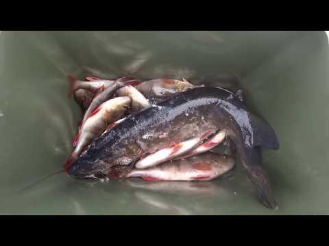 зимняя рыбалка на карася - 2015-12-28 11:44:57