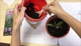 福德學校一人一花種植活動