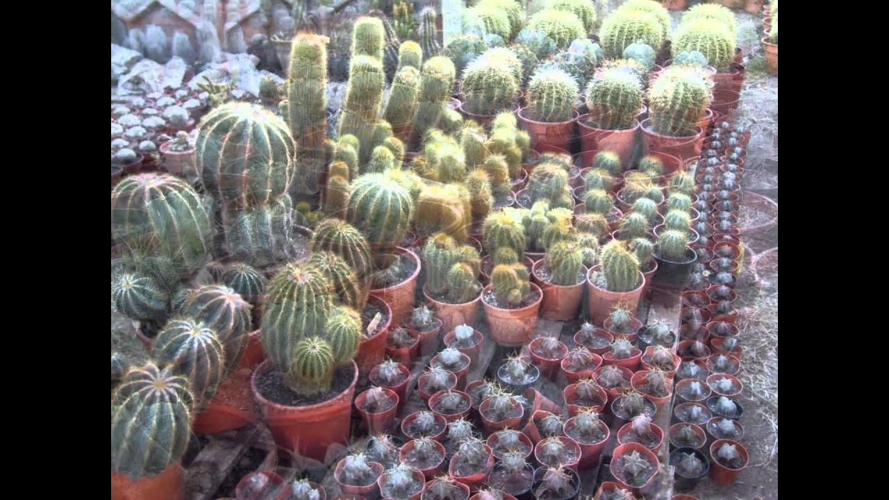 Mundo cactus cordoba argentina youtube for Cactus argentina