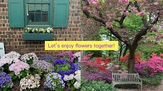 뜨개질은 잠시 뒤로하고 베르사이유의 장미 정원을 연상케…