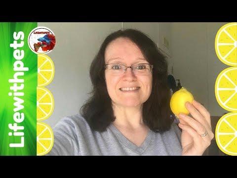 Lemons for Leukemia Challenge LIVE!