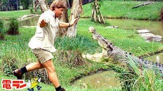 【衝撃】動物に襲われて命を落とした人8選