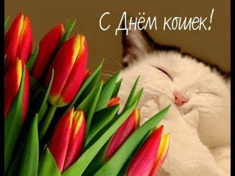 Не жалей сегодня Вискас, для своего КОТА! Сегодня отмечаем всемирный день КОШЕК!!!