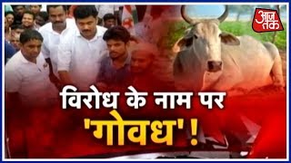 halla bol cow politics reaches new heights