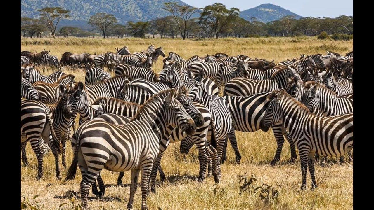 Bài 24. Động vật hoang dã và đồ dùng của bé