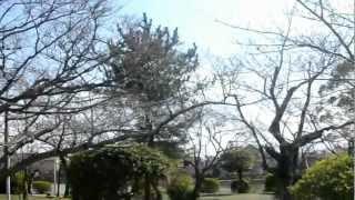 アキーラさん!三重・桑名城址(九華公園),Kuwana-castle(Kyuka-park)Mie,Japan