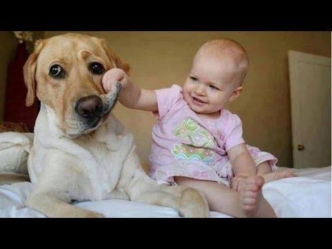 재미 아기 성가신 개 - 귀여운 강아지