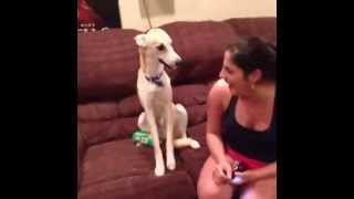 "Laughing dog/ Perro riendo ""Vine"""