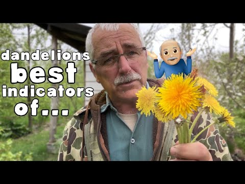 DANDELIONS are the BEST INDICATORS of...