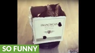 Cat in cardboard box rides robot vacuum