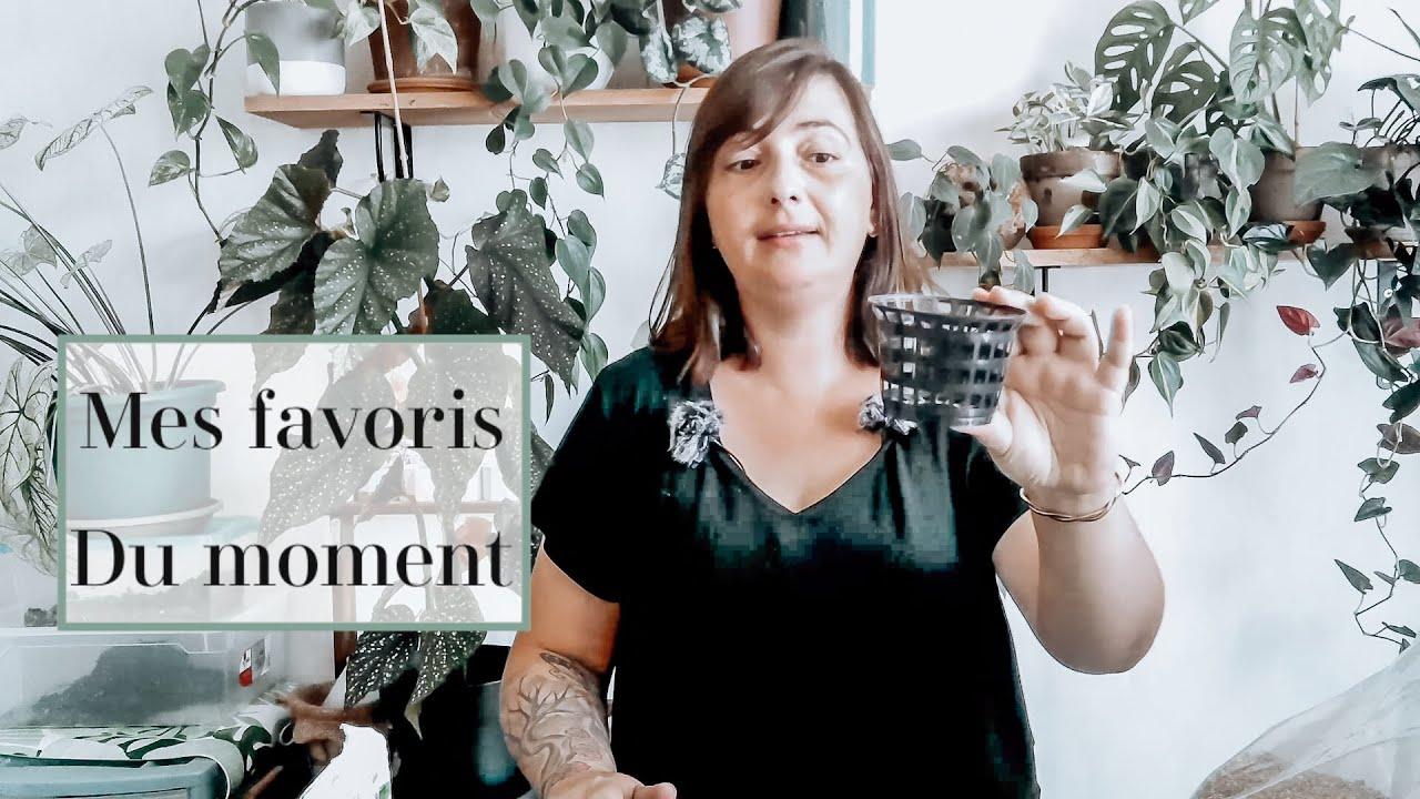 🌿MES FAVORIS POUR UNE JUNGLE URBAINE | JOURNAL D'UNE PLANT-LOVER