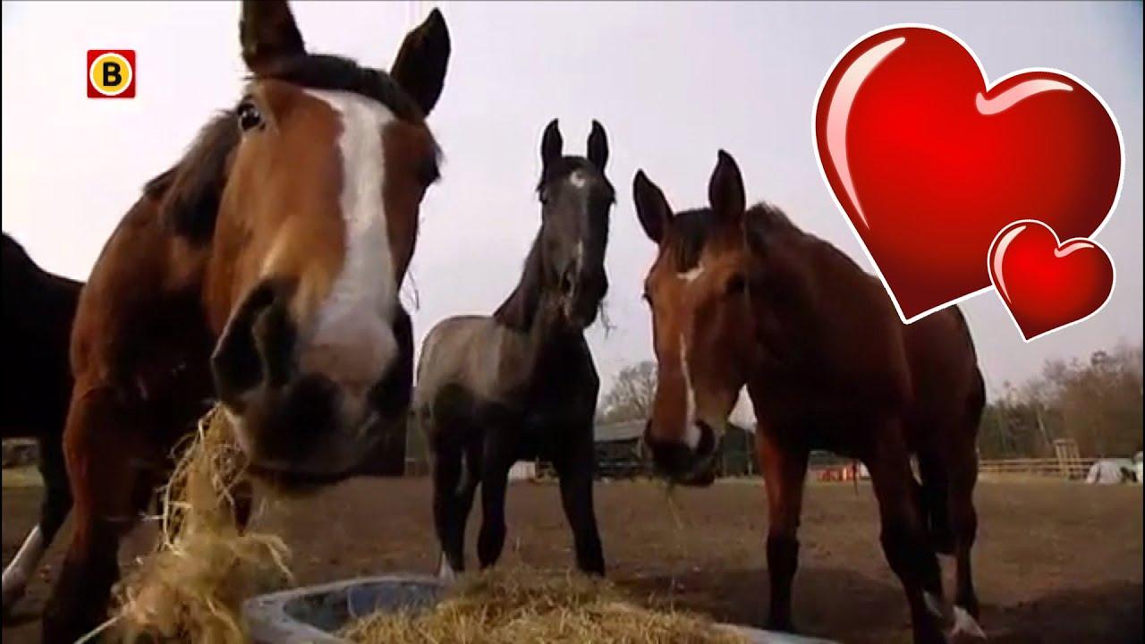 paardenliefhebbbers dating)