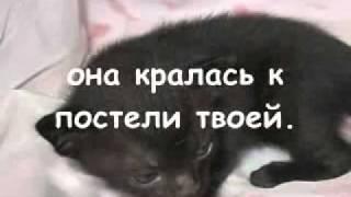 Как умирают кошки ...