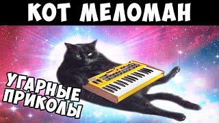 Лютые приколы. Собаки против кошек. Top Meme News.