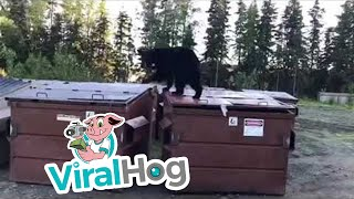 Bear Gets Alarmed thumbnail