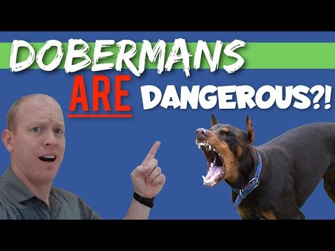 How Dangerous Can a Doberman Really Be?