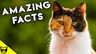 Amazing Facts About Calico Cats and Tortoiseshell Cats