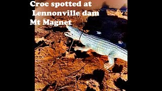 Croc spotted at Lennonville dam Mt Magnet