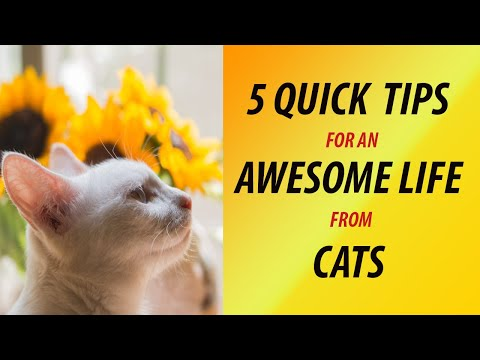 Five Tips For An Awesome Life From Cats