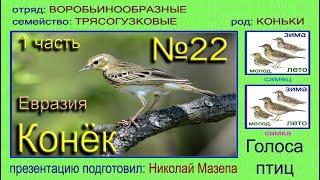 Конек. 1 часть Евразия. Голоса птиц