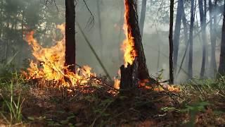 Авиалесоохрана о сбережении лесов России