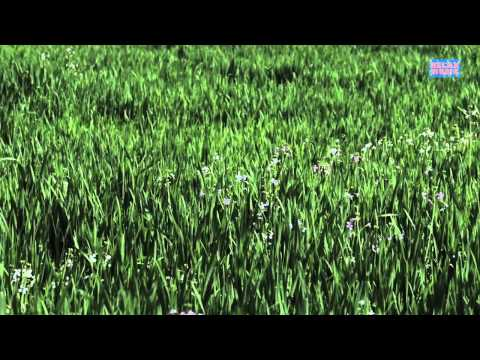 Grassland Nature Ambient Sound for Relaxation