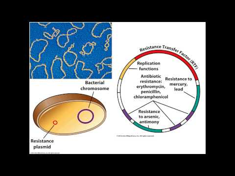 Ch 8 Gene Regulation Horizontal Gene Transfer Mutations