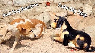 Wow Nice Prank Fake Dog Prank Dog So Funny Video Try Not to Laugh
