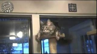 Самый большой домашний кот в мире.flv