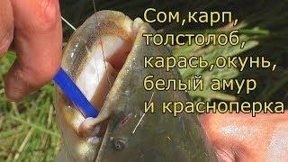 Удачная рыбалка на поплавок  Семь видов рыб за одну рыбалку.  My fishing