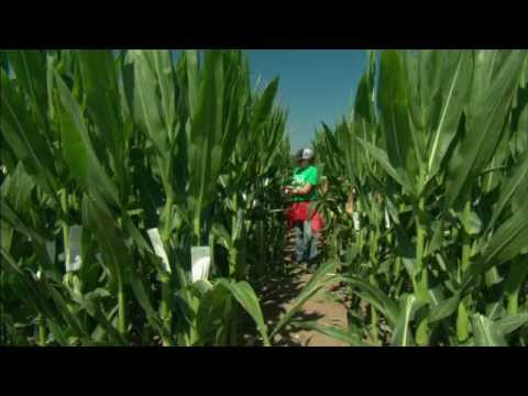 DuPont Pioneer Pollination: Processes And Procedures