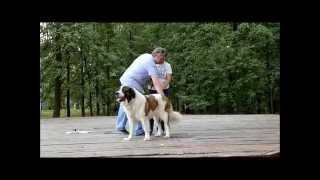 Семинар для владельцев собак породы МОСКОВСКАЯ СТОРОЖЕВАЯ (Часть 2)