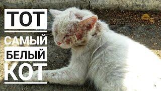Бросила израненного кота и ушла😒