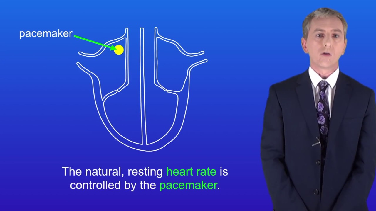 GCSE Science Biology (9-1) The heart and circulation - YouTube