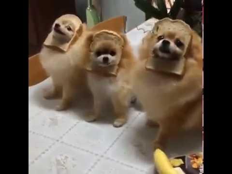 Watch Dogs Memes