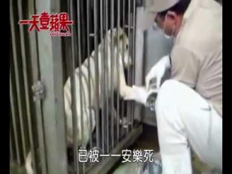 (賈似道)高雄市流浪動物之家協會,郭進億