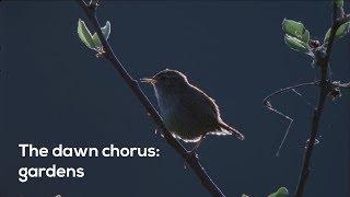 How to…Listen to the garden dawn chorus
