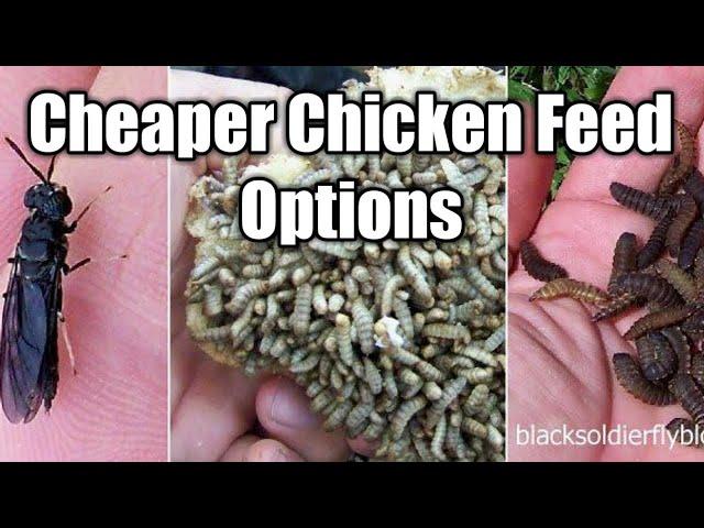 CHEAPER FEED OPTIONS