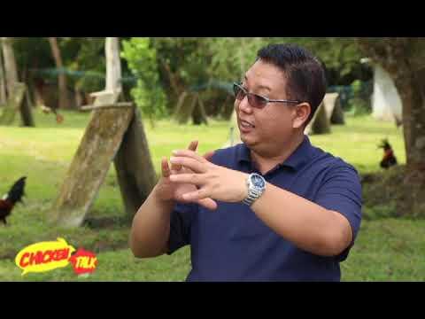 CHICKEN TALK: VICE MAYOR JOSEPH LUTERO OF LUTERO BROS GAMEFARM
