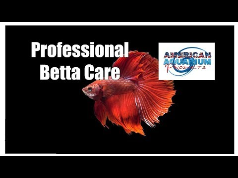 Betta Fish Care Guide- Siamese Fighting Fish | Sick Betta Fish