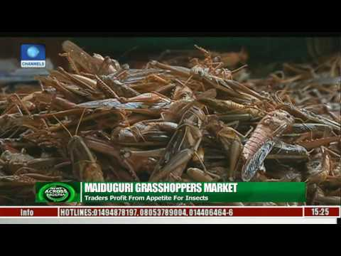 Maiduguri Grasshoppers Market Traders Profit From Appetite For Insects