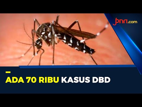 Ancaman DBD Di Tengah Pandemi Covid-19, 500 Orang Meninggal