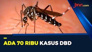 Ancaman DBD Di Tengah Pandemi Covid-19, 500 Orang Meninggal - JPNN.com