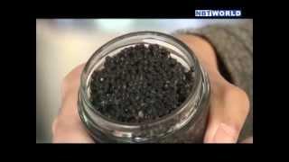 Sturgeon farming: Caviar from Thailand