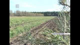 видео Питомник «Ивантеевский лесопитомник»