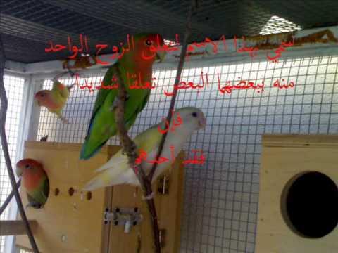 معلومات عن بعض طيور الزينة